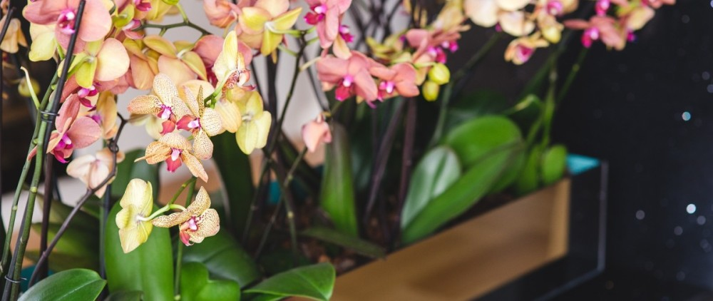 orchid-791514_1920