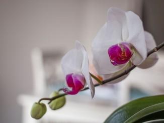 flower-626583_1920