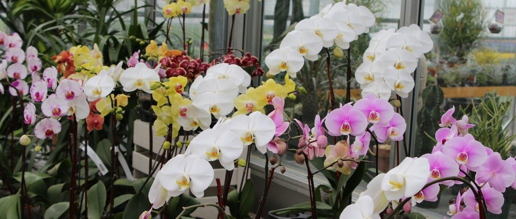 orchid-1345159_1280