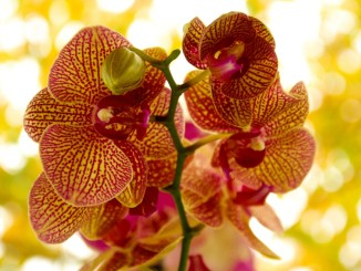 orchid-541726_1920