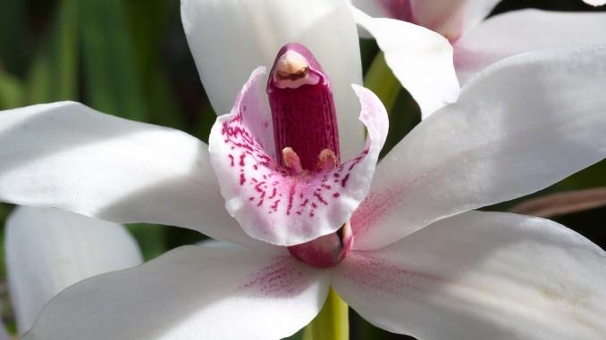 flower-793215_1280