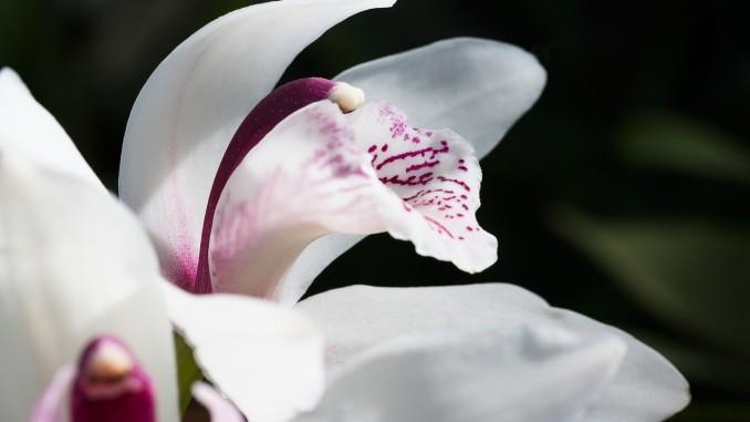 flower-793224_1280