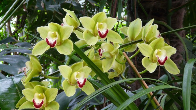 orchid-53062_1280