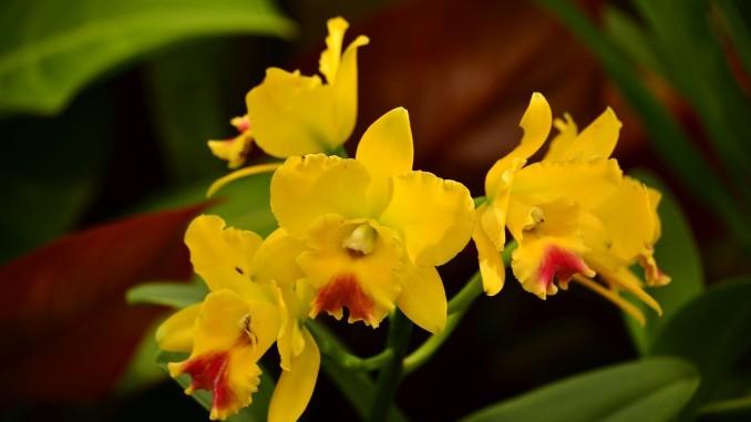 orchids-737015_1280