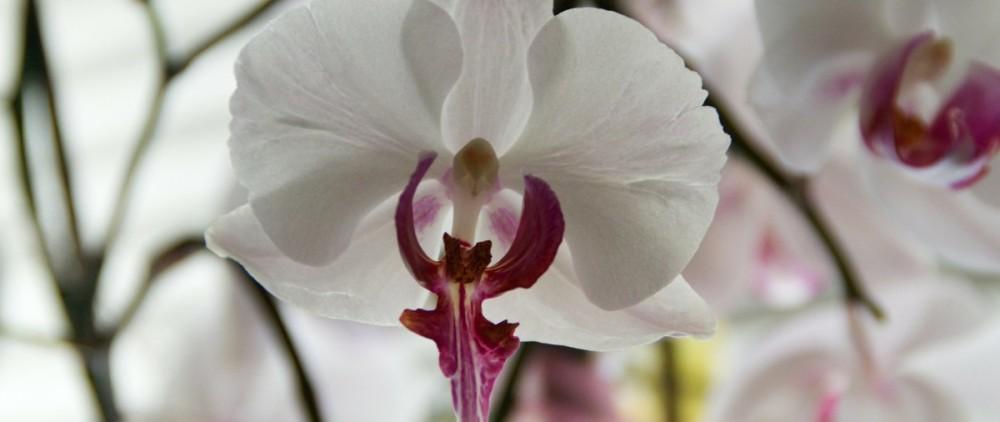 flower-193211_1920