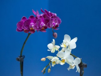 orchid-383070_1920