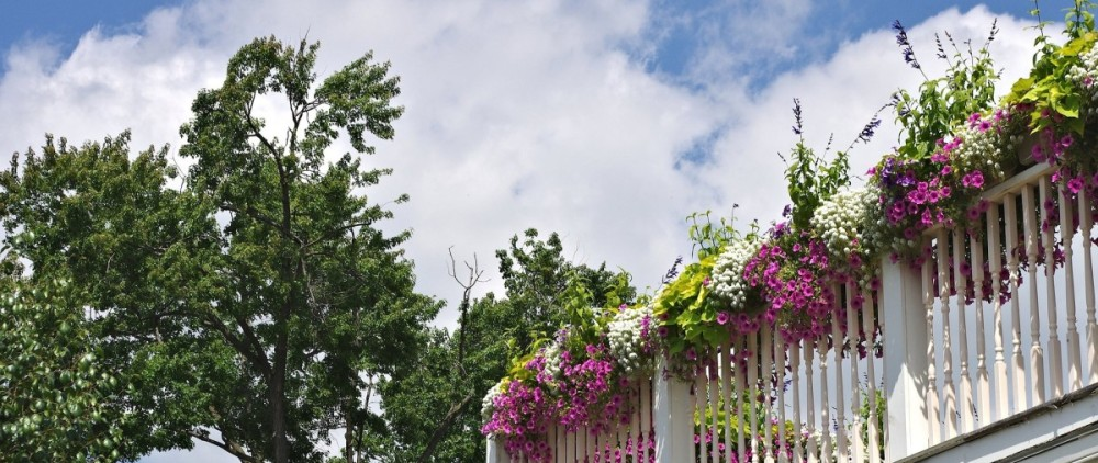 balcony-flowers-686889_1920