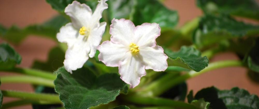 flower-1084189_1920