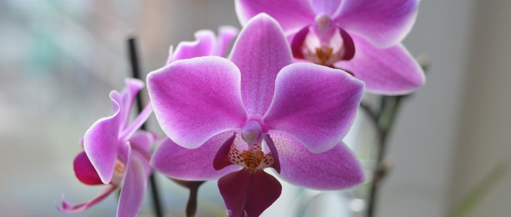 orchid-1128274_1280