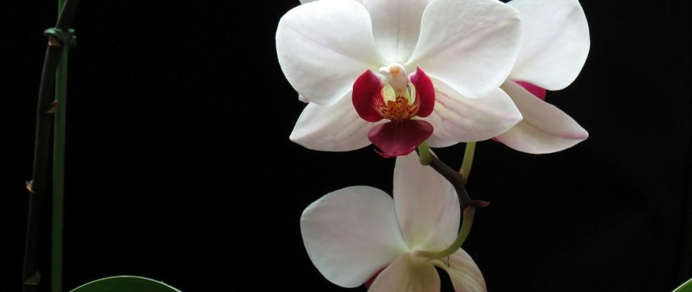 flowers-596931_1920