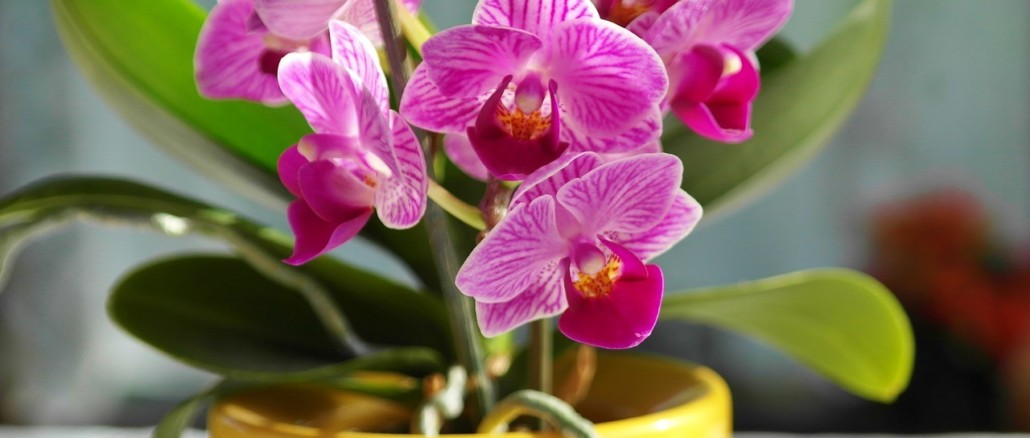 orchid-1425517_1280