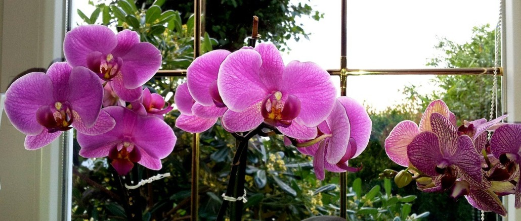 orchid-352609_1280