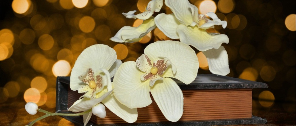 orchid-606841_1280