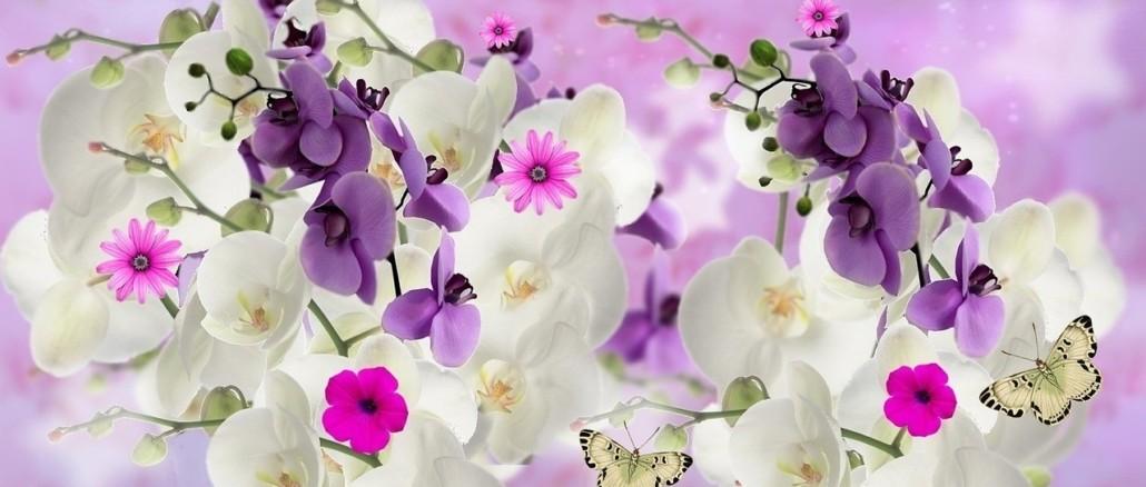 orchids-862899_1280