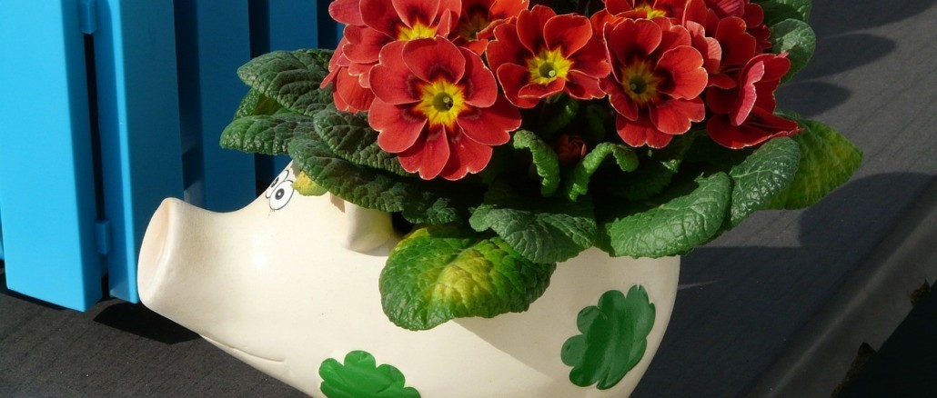 flowers-114568_1280