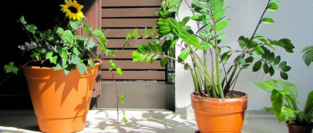 plants-170253_1280