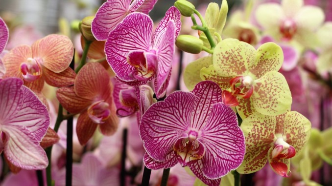 orchid-1841881_1280
