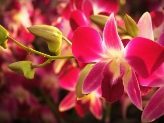 flower-1550893_1280