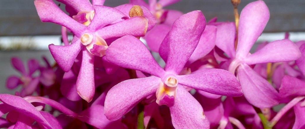 orchid-1553699_1280