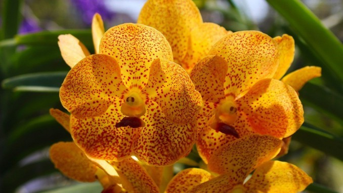 orchid-2047747_1280