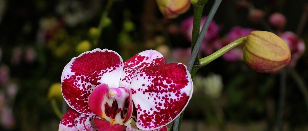 orchid-2088202_1280